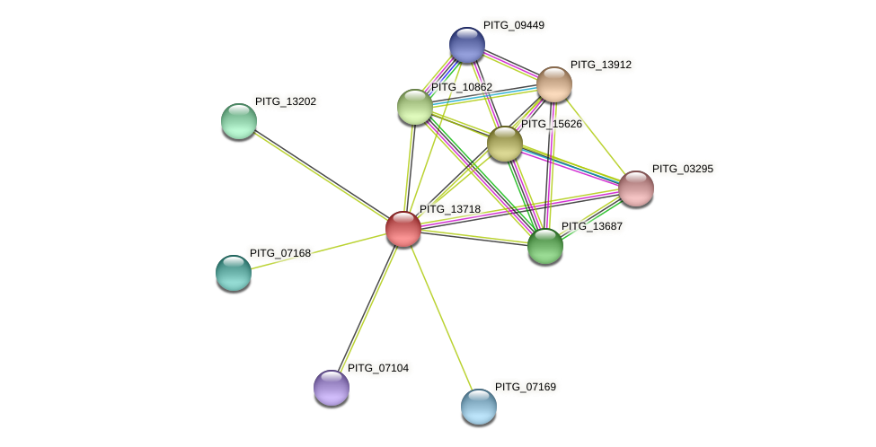 PITG_13718 protein (Phytophthora infestans) - STRING interaction network