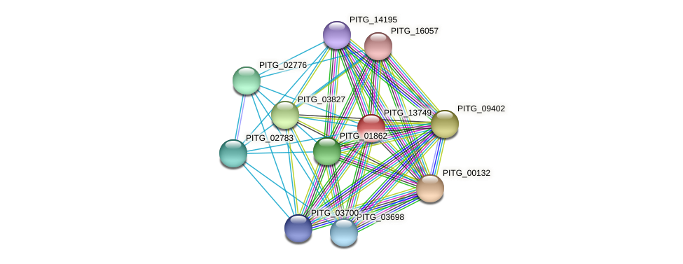 PITG_13749 protein (Phytophthora infestans) - STRING interaction network