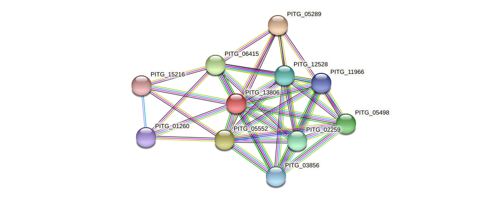 PITG_13806 protein (Phytophthora infestans) - STRING interaction network