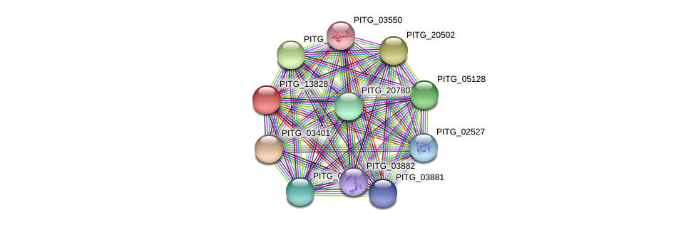 PITG_13828 protein (Phytophthora infestans) - STRING interaction network