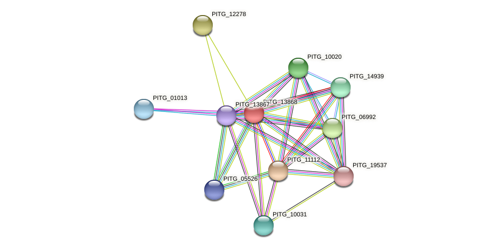 PITG_13868 protein (Phytophthora infestans) - STRING interaction network