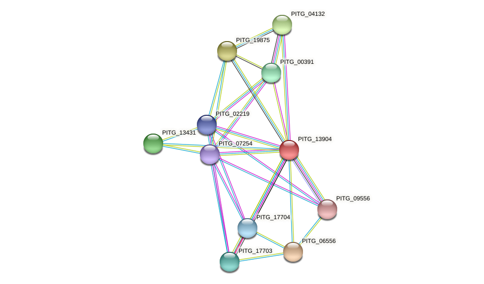 PITG_13904 protein (Phytophthora infestans) - STRING interaction network