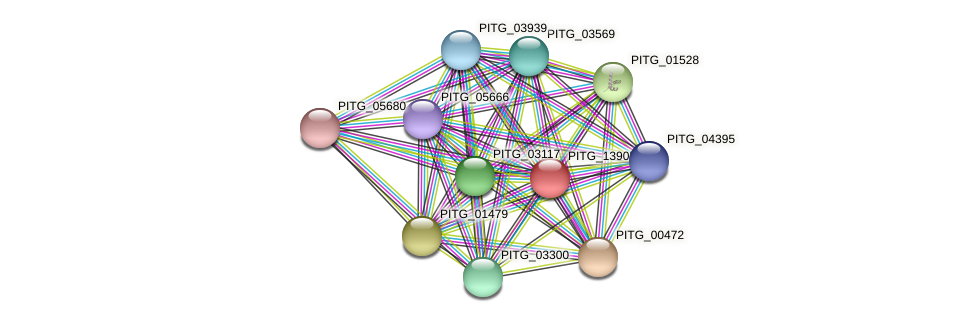 PITG_13905 protein (Phytophthora infestans) - STRING interaction network