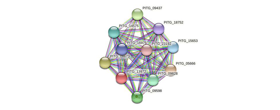 PITG_13972 protein (Phytophthora infestans) - STRING interaction network