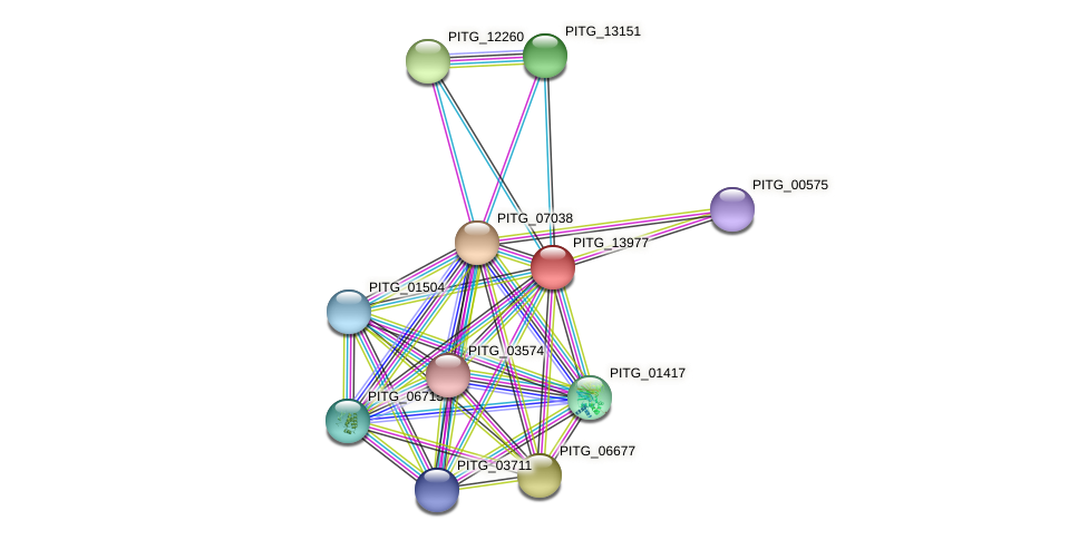 PITG_13977 protein (Phytophthora infestans) - STRING interaction network