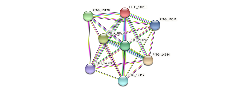 PITG_14018 protein (Phytophthora infestans) - STRING interaction network