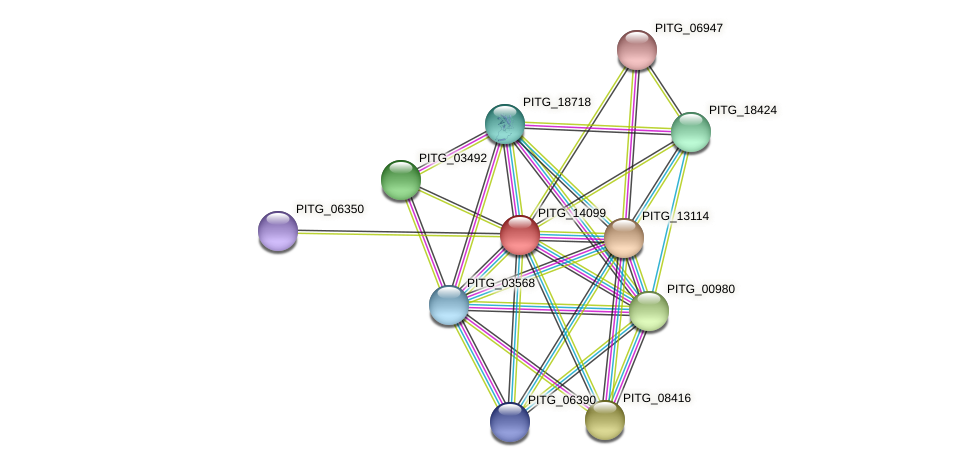 PITG_14099 protein (Phytophthora infestans) - STRING interaction network