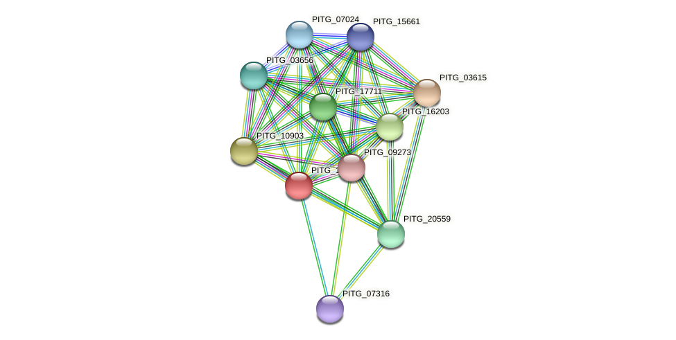 PITG_14123 protein (Phytophthora infestans) - STRING interaction network