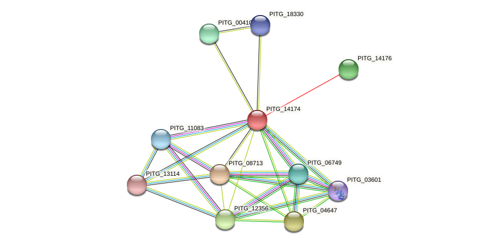 PITG_14174 protein (Phytophthora infestans) - STRING interaction network