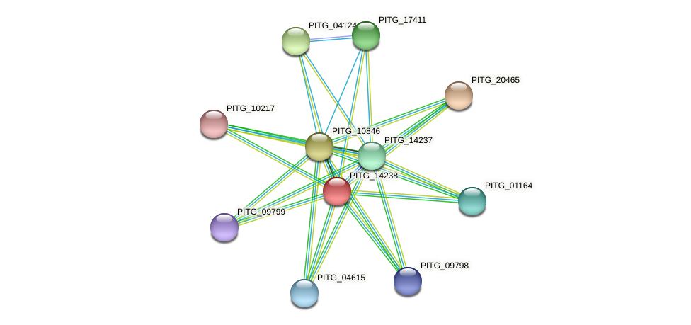 PITG_14238 protein (Phytophthora infestans) - STRING interaction network