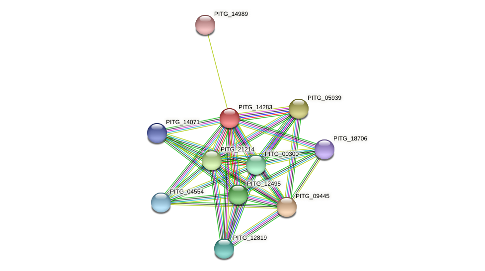 PITG_14283 protein (Phytophthora infestans) - STRING interaction network