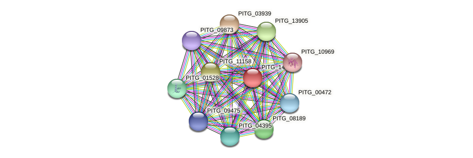 PITG_14399 protein (Phytophthora infestans) - STRING interaction network