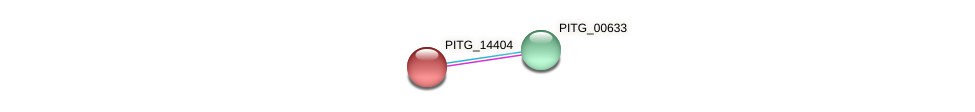 PITG_14404 protein (Phytophthora infestans) - STRING interaction network