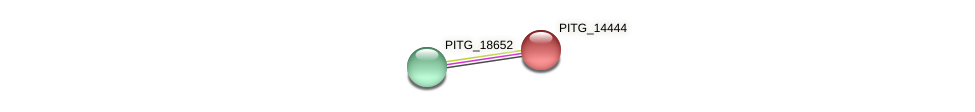 PITG_14444 protein (Phytophthora infestans) - STRING interaction network