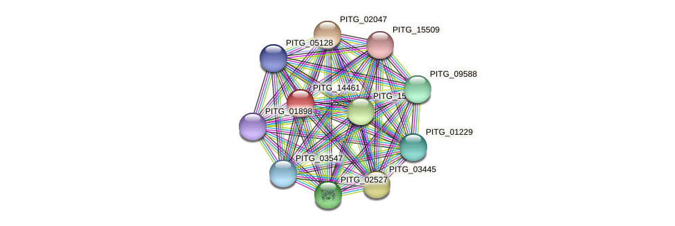 PITG_14461 protein (Phytophthora infestans) - STRING interaction network