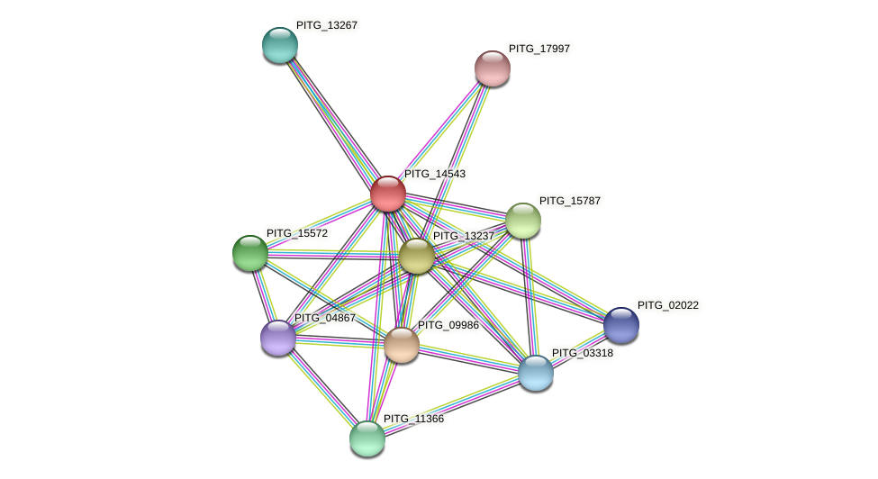 PITG_14543 protein (Phytophthora infestans) - STRING interaction network