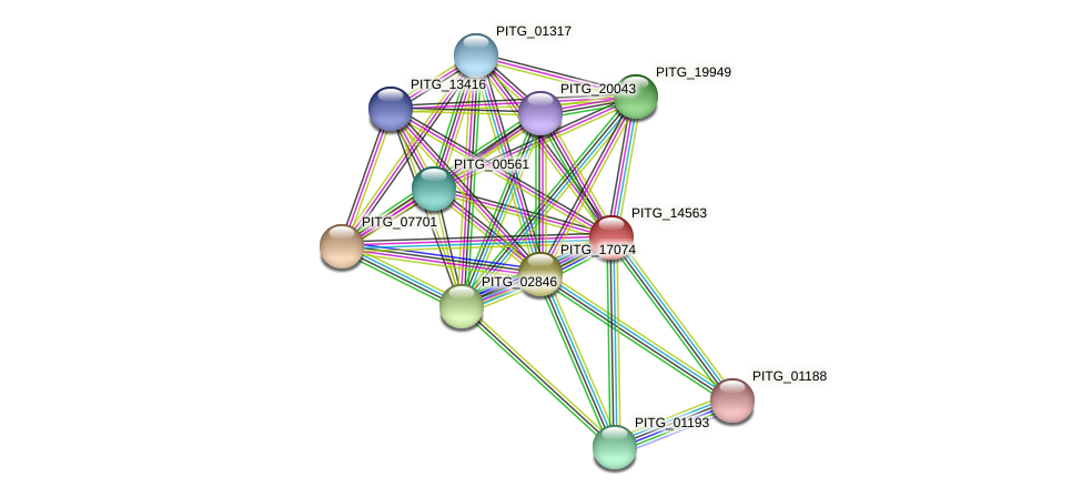 PITG_14563 protein (Phytophthora infestans) - STRING interaction network