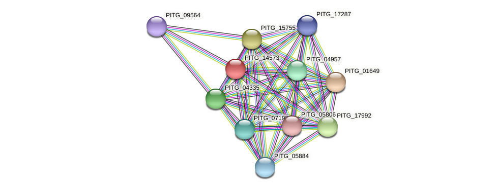 PITG_14573 protein (Phytophthora infestans) - STRING interaction network