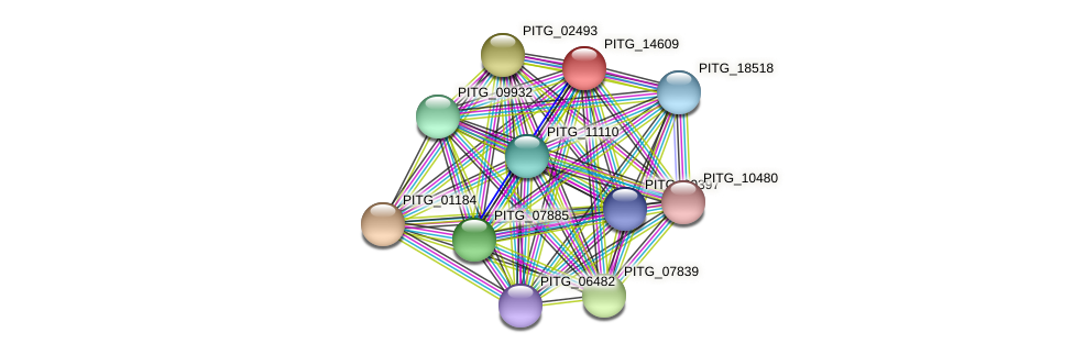 PITG_14609 protein (Phytophthora infestans) - STRING interaction network