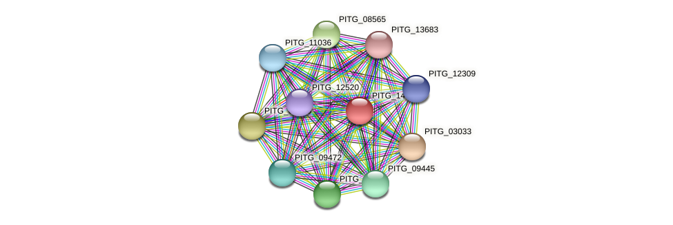 PITG_14612 protein (Phytophthora infestans) - STRING interaction network