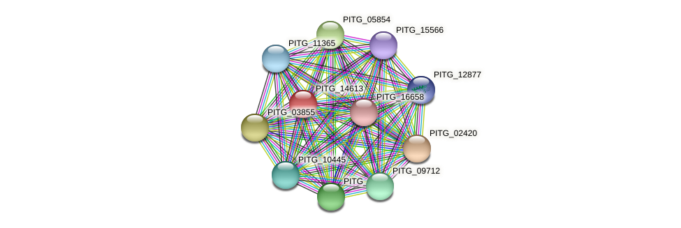 PITG_14613 protein (Phytophthora infestans) - STRING interaction network