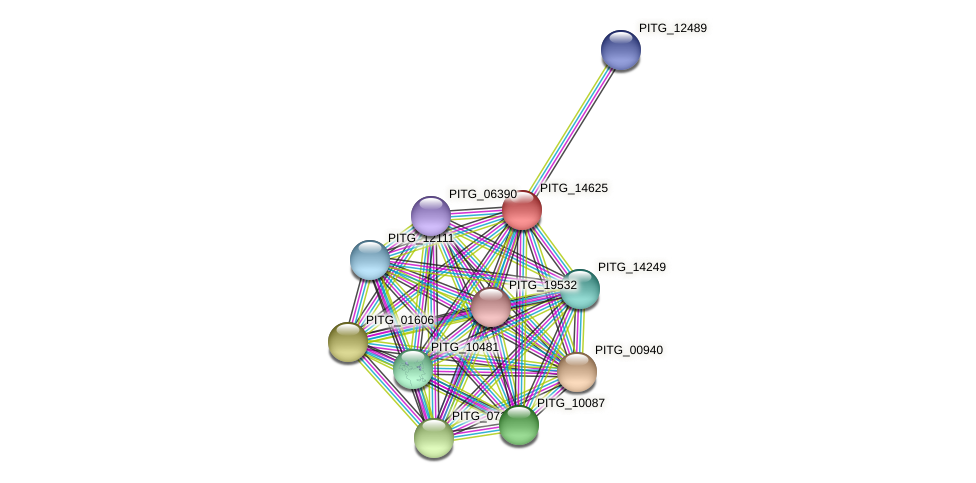 PITG_14625 protein (Phytophthora infestans) - STRING interaction network