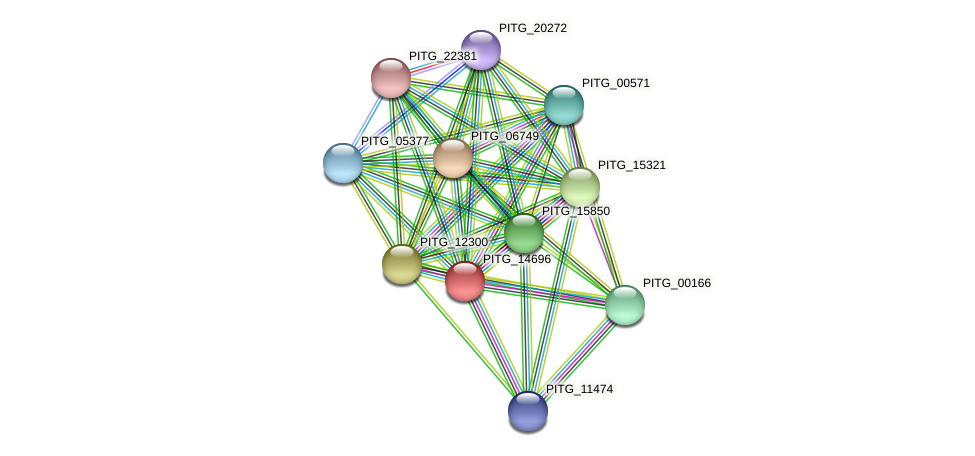 PITG_14696 protein (Phytophthora infestans) - STRING interaction network