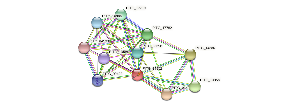 PITG_14852 protein (Phytophthora infestans) - STRING interaction network