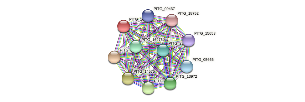 PITG_14874 protein (Phytophthora infestans) - STRING interaction network