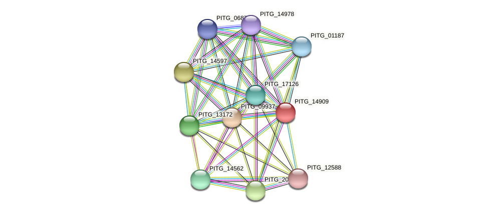 PITG_14909 protein (Phytophthora infestans) - STRING interaction network