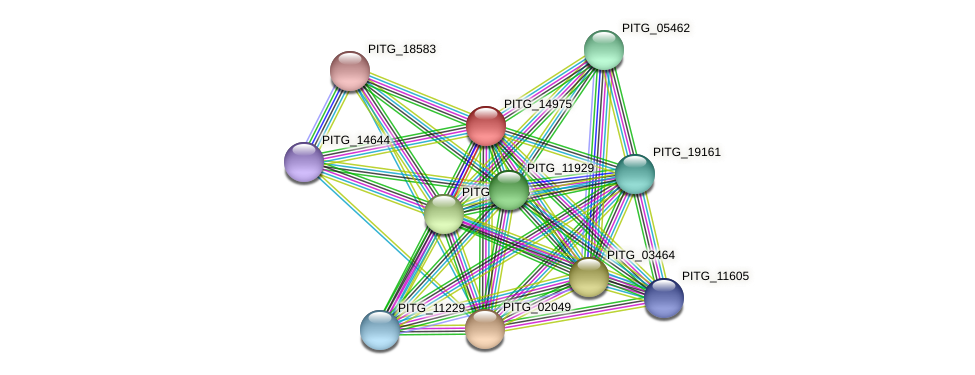 PITG_14975 protein (Phytophthora infestans) - STRING interaction network