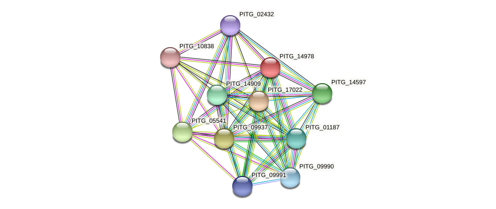 PITG_14978 protein (Phytophthora infestans) - STRING interaction network