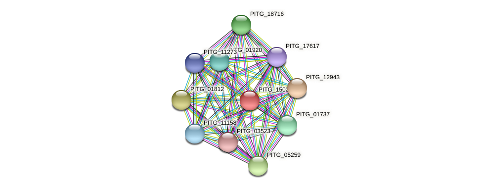 PITG_15022 protein (Phytophthora infestans) - STRING interaction network
