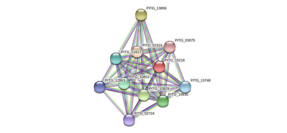 PITG_15216 protein (Phytophthora infestans) - STRING interaction network