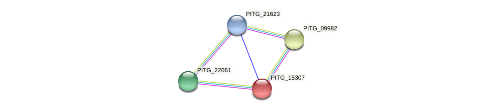 PITG_15307 protein (Phytophthora infestans) - STRING interaction network