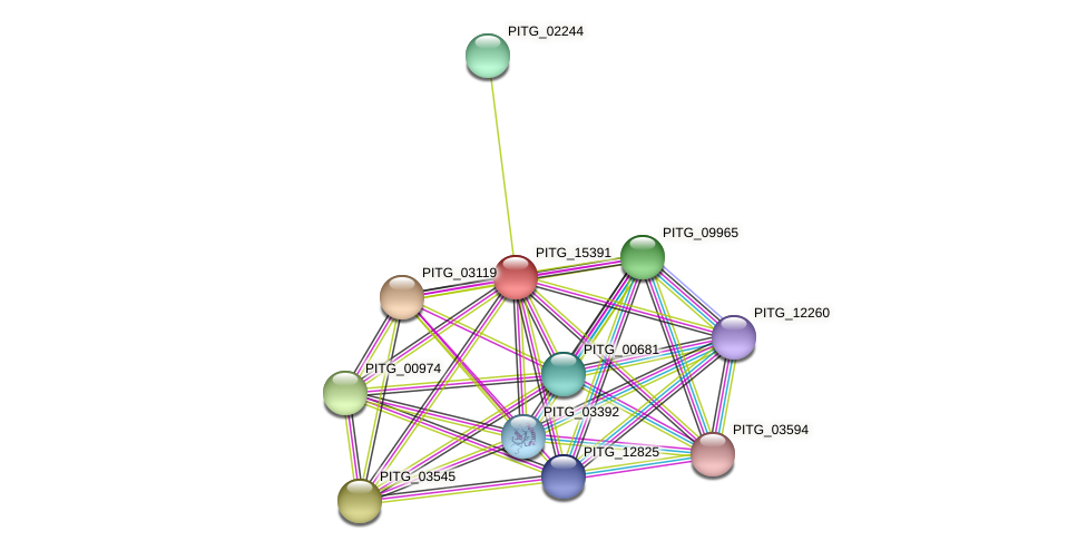 PITG_15391 protein (Phytophthora infestans) - STRING interaction network