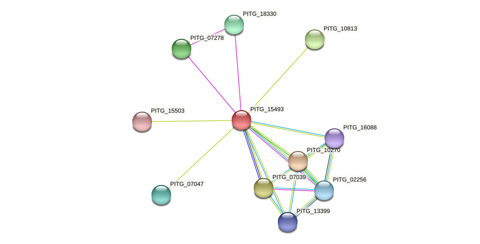 PITG_15493 protein (Phytophthora infestans) - STRING interaction network