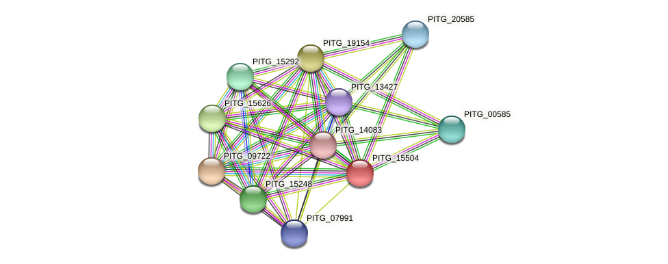 PITG_15504 protein (Phytophthora infestans) - STRING interaction network