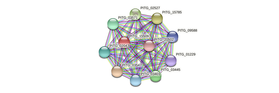 PITG_15509 protein (Phytophthora infestans) - STRING interaction network