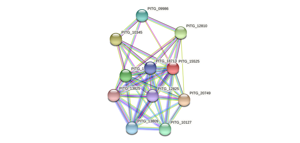 PITG_15525 protein (Phytophthora infestans) - STRING interaction network