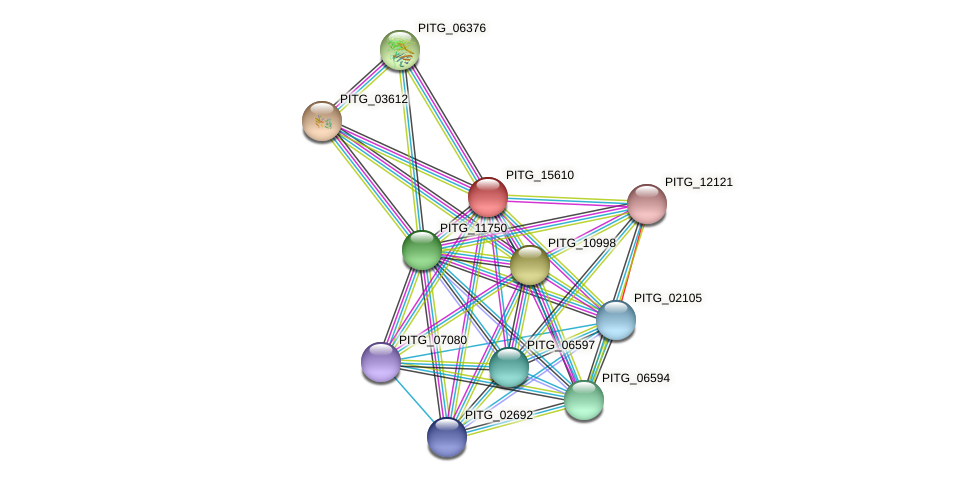 PITG_15610 protein (Phytophthora infestans) - STRING interaction network