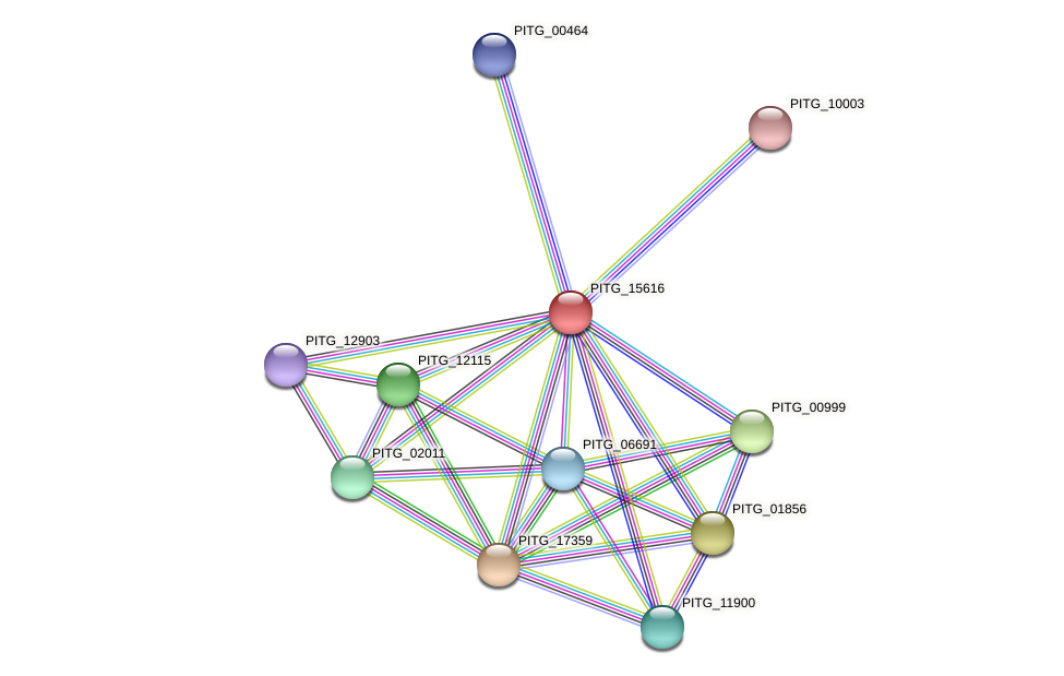 PITG_15616 protein (Phytophthora infestans) - STRING interaction network