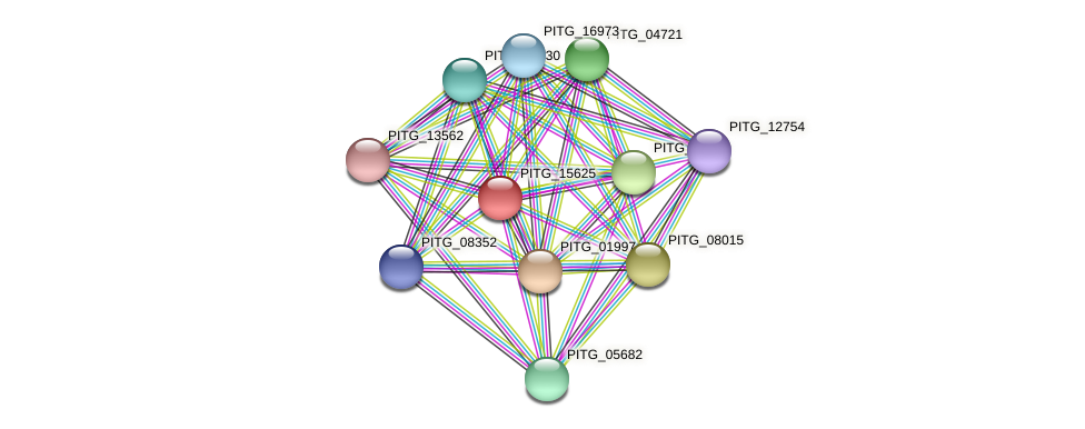 PITG_15625 protein (Phytophthora infestans) - STRING interaction network