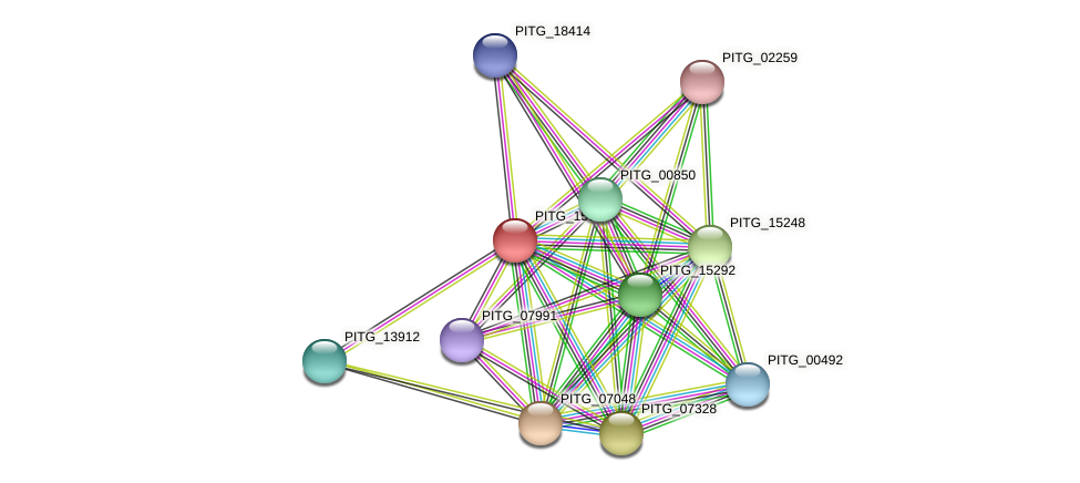 PITG_15626 protein (Phytophthora infestans) - STRING interaction network