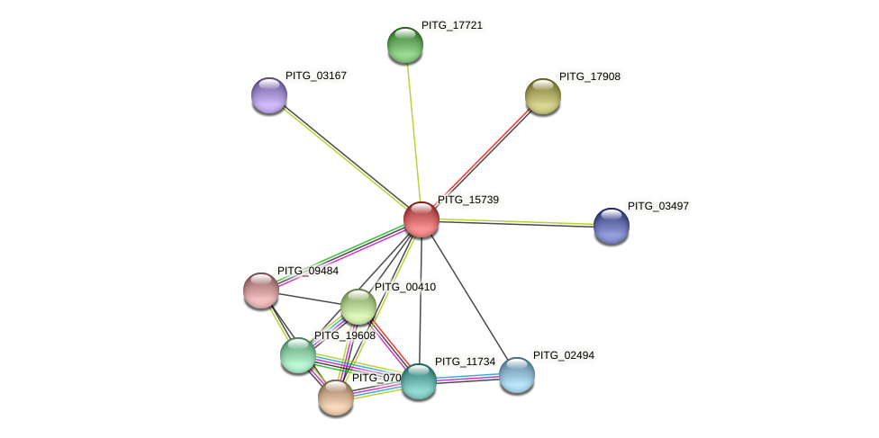 PITG_15739 protein (Phytophthora infestans) - STRING interaction network