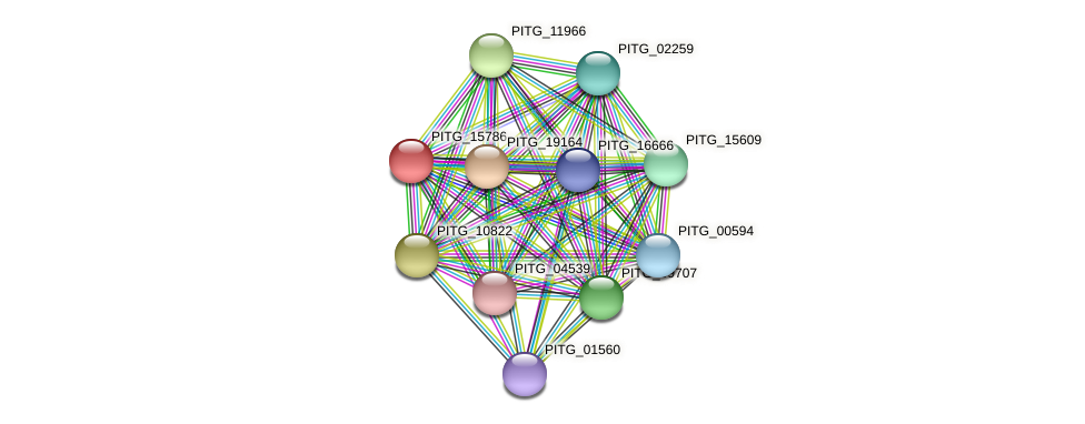 PITG_15786 protein (Phytophthora infestans) - STRING interaction network