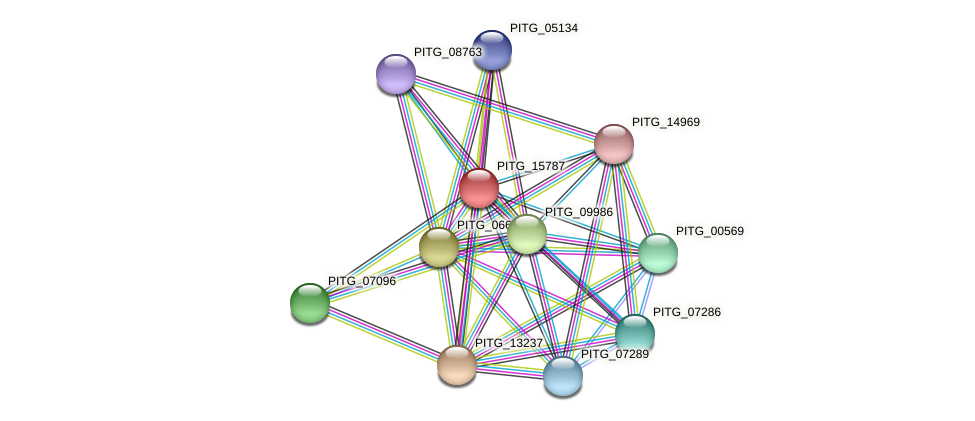 PITG_15787 protein (Phytophthora infestans) - STRING interaction network