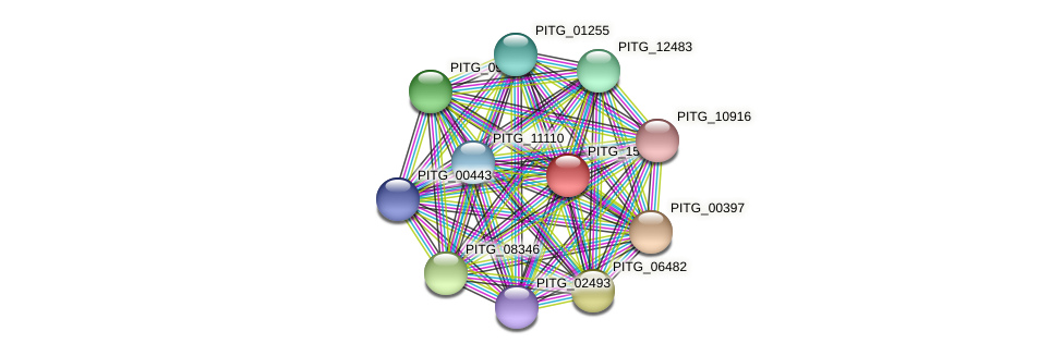 PITG_15810 protein (Phytophthora infestans) - STRING interaction network