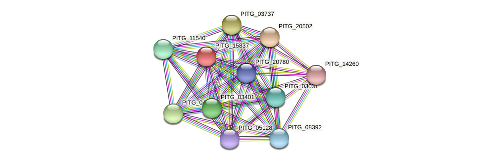 PITG_15837 protein (Phytophthora infestans) - STRING interaction network
