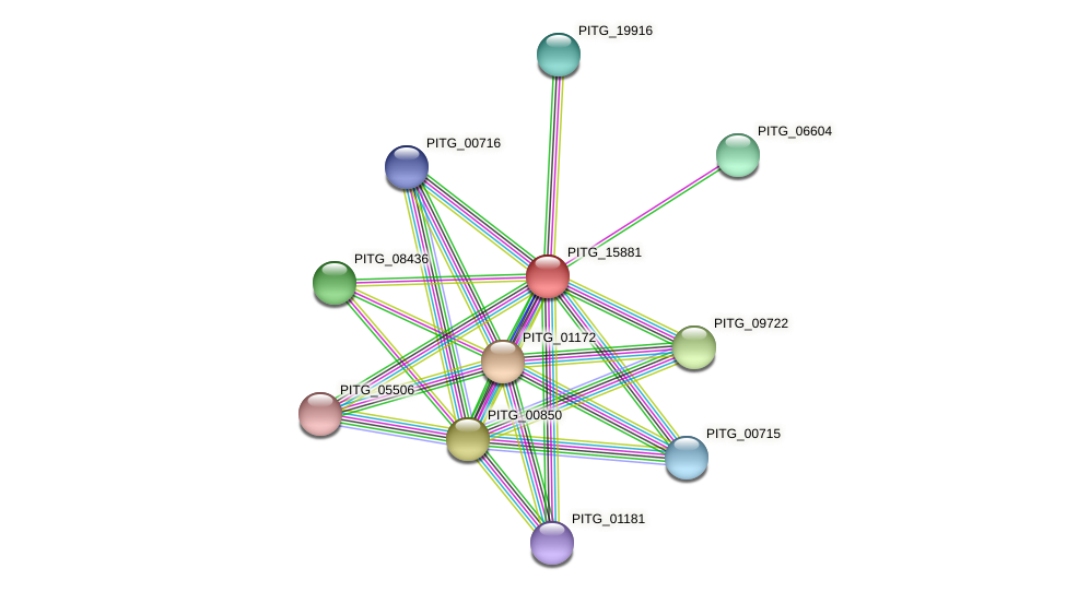 PITG_15881 protein (Phytophthora infestans) - STRING interaction network